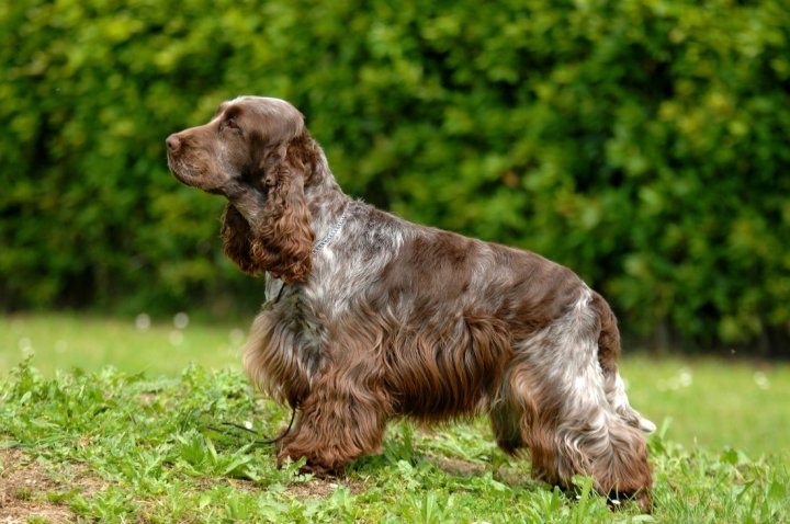 Cute Small Medium Dog Breeds